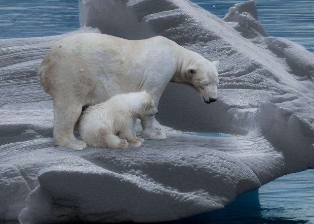 polar-bear-709682_960_720